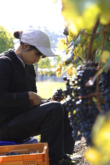 中央葡萄酒 山梨 甲州 グレイス ワイン 明野
