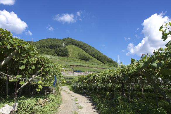 中央葡萄酒 山梨 甲州 グレイス ワイン 勝沼